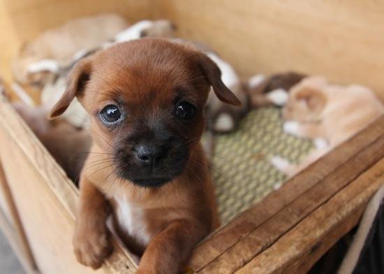 Puppy16
