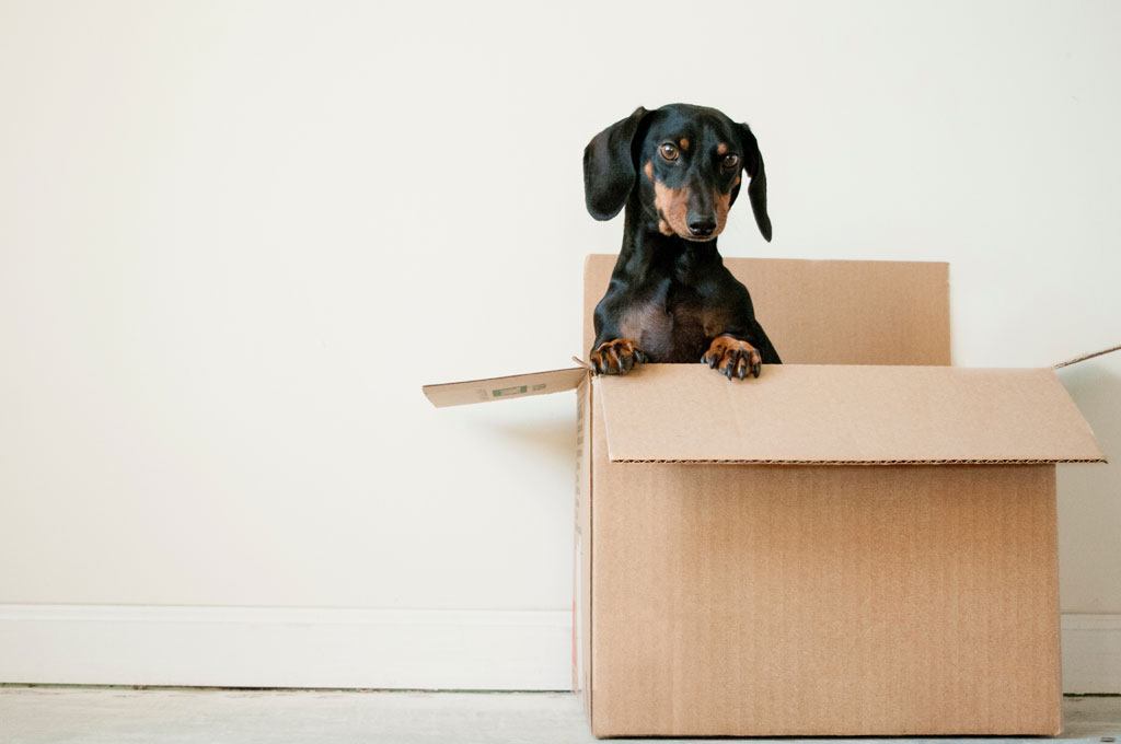 move out cleanings for home