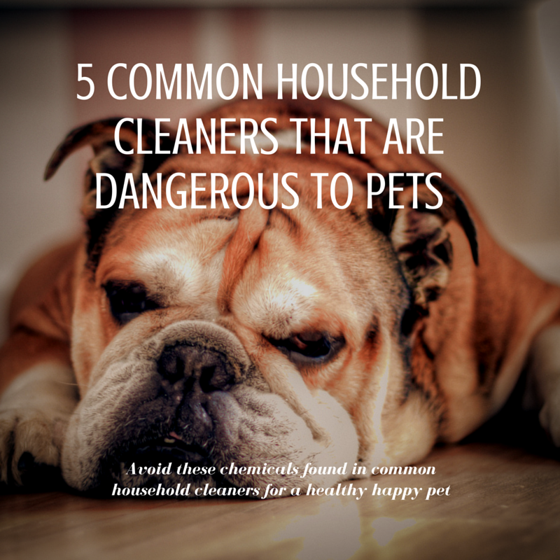 5 Common Household Cleaners That Are Dangerous to Pets